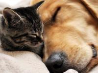 cani-gatti-cremati-piccola