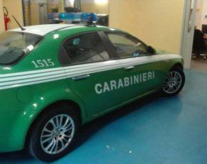 auto verdi